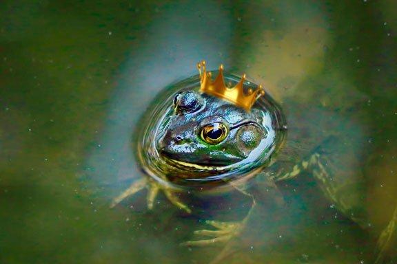 Soñar con un sapo o una rana en la lluvia
