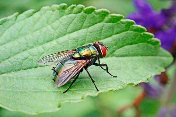 Soñar matando moscas negras