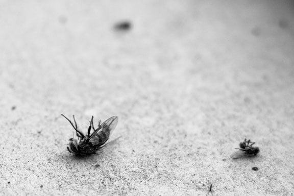 Soñar que estás matando moscas sin problemas