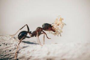 Sueñas con las hormigas en el suelo