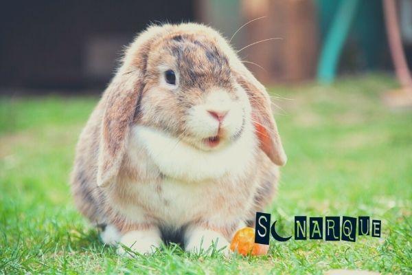sueños con conejo