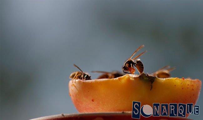 que-significa-soñar-con-abejas-y-avispas
