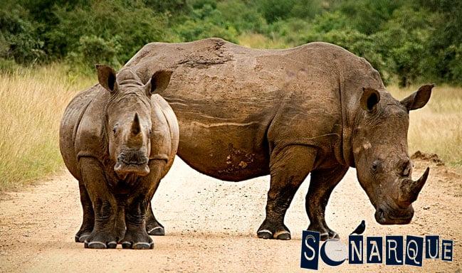que significa soñar con rinocerontes