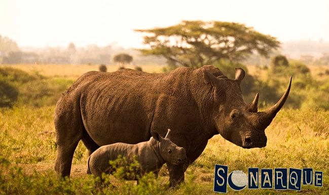 que significa soñar con un rinoceronte