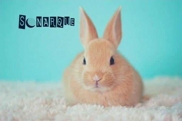 soñar con conejos saltando