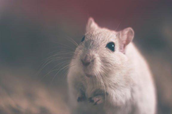 soñar con grandes ratas