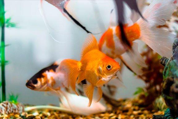 soñar con peces en acuario