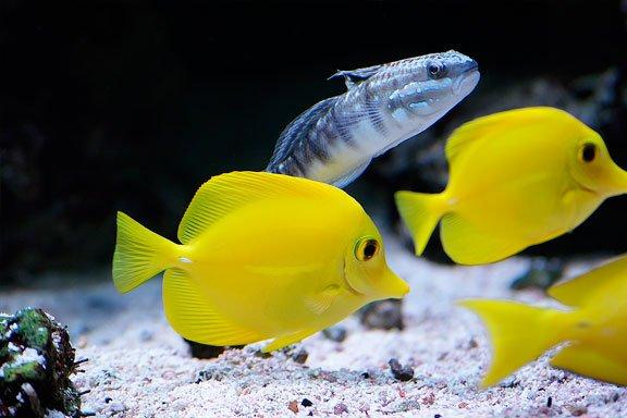 soñar con peces pequeños