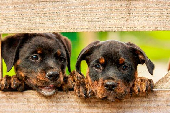 soñar-con-perros