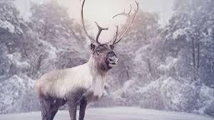 Soñar con renos