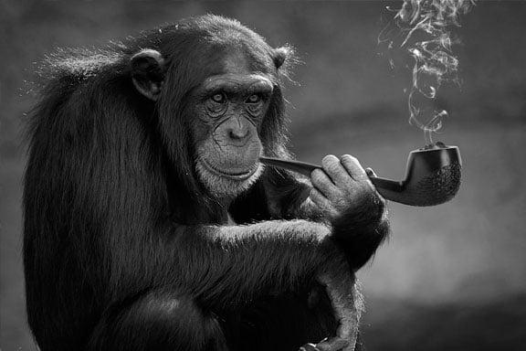 soñar con ser un mono