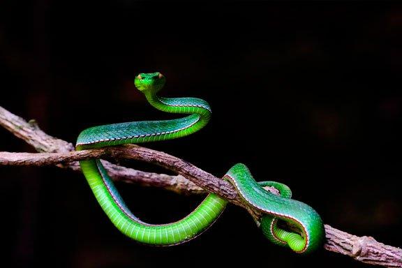 soñar con serpientes de colores