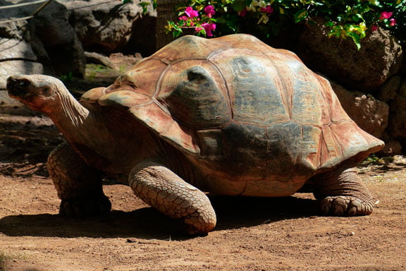 soñar con tortuga en el jardín