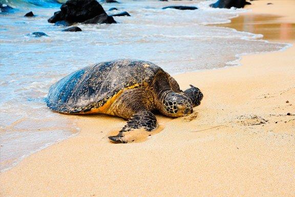 soñar con tortuga en la playa
