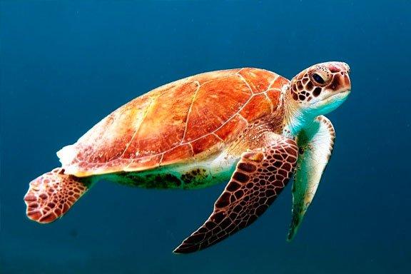 soñar con tortuga marina