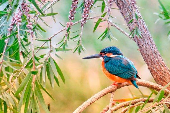 soñar con un hermoso pájaro