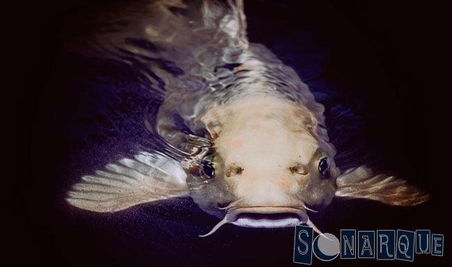 Que significa soñar con agarrar un pez