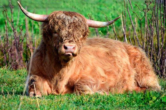 soñar con un toro peluche