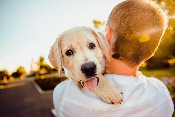 soñar que amas un perro