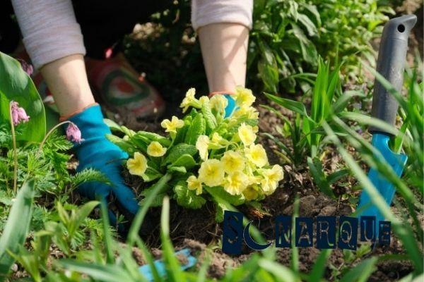 soñar plantando flores
