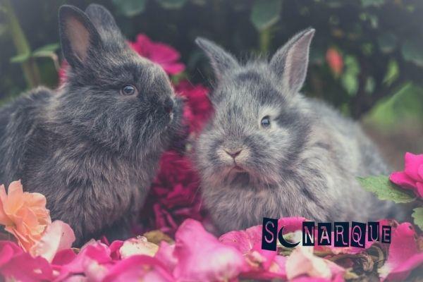 soñar con conejos grises